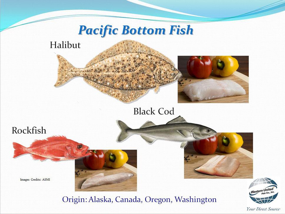 Western united fish company for Pacific fish company