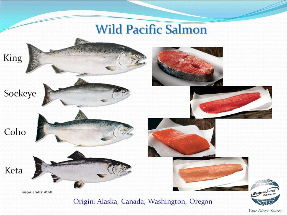 how to cook packfkc salmon portions